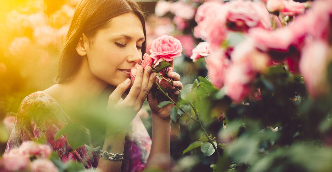 Rosen optimal pflanzen und pflegen